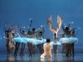 Madia_SWAN-LAKE_Teatr-Wielki_02